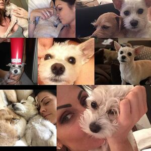 Happy 4th birthday to this snuggle muffin...life is infinitely better with her in it. Thank you for choosing me to be your mommy #adoptdontshop #benihana